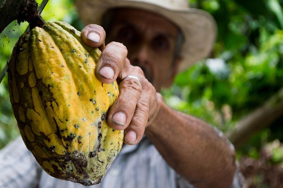 Duurzaam beleggen in cacao